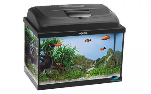 Bể cá mini Aquael Classic Oval Aquarium Set 40 và 60