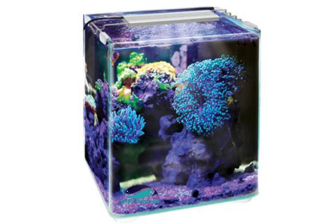 Bể cá mini OF My Little Ocean